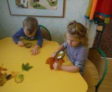 Biedronki prowadzą obserwacje liści z wykorzystaniem lup